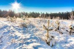 Один из самых холодных дней зимы и самый короткий день в году (Фото: Grisha Bruev, Shutterstock)
