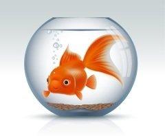 Символом дня была выбрана известная героиня русских народных сказок – Золотая рыбка (Фото: SeneGal, Shutterstock)