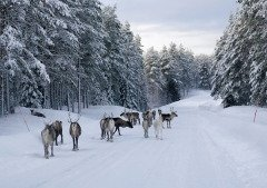 На Авдея опасались выходить на улицу (Фото: Mikhail Markovskiy, Shutterstock)
