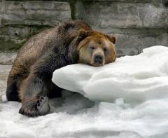 Люди верили, что с этого дня зима в медвежьей шкуре ходит по деревням... (Фото: Shutterstock)