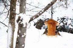 .Если воробьи начинали собирать пух и перья и тащить к себе в гнезда, это предвещало сильные морозы... (Фото: Maridav, Shutterstock)