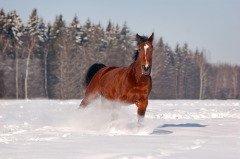 Большое внимание уделяли домашним животным (Фото: Olga_i, Shutterstock)