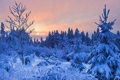 Снег или сильный мороз в этот день обещали плодородный год (Фото: Igor Borodin, Shutterstock)