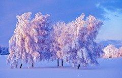 Считалось, что морозы в этот день — к затяжным холодам (Фото: TTphoto, Shutterstock)