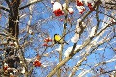 Если небо было ясным, а на дворе стоял морозец — крестьяне ждали хорошего урожая (Фото: HGalina, Shutterstock)