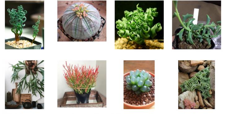 Комнатные растения, о которых многие даже не подозревали