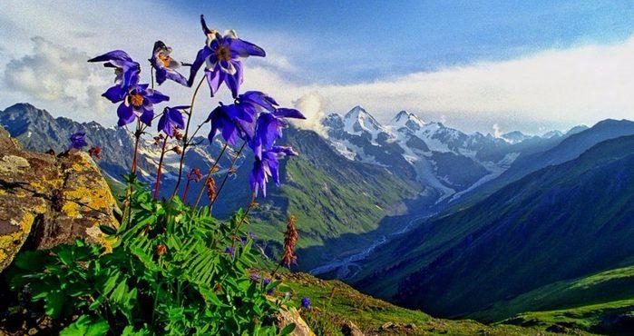 Тувинские каникулы: Владимир Путин напомнил о былой кинославе Алтайских гор