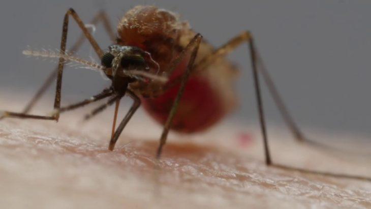 Как поймать комаров и не дать им размножаться — мастерим устройство от комаров