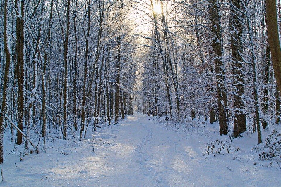 Лес, тайга, - фото Pixabay