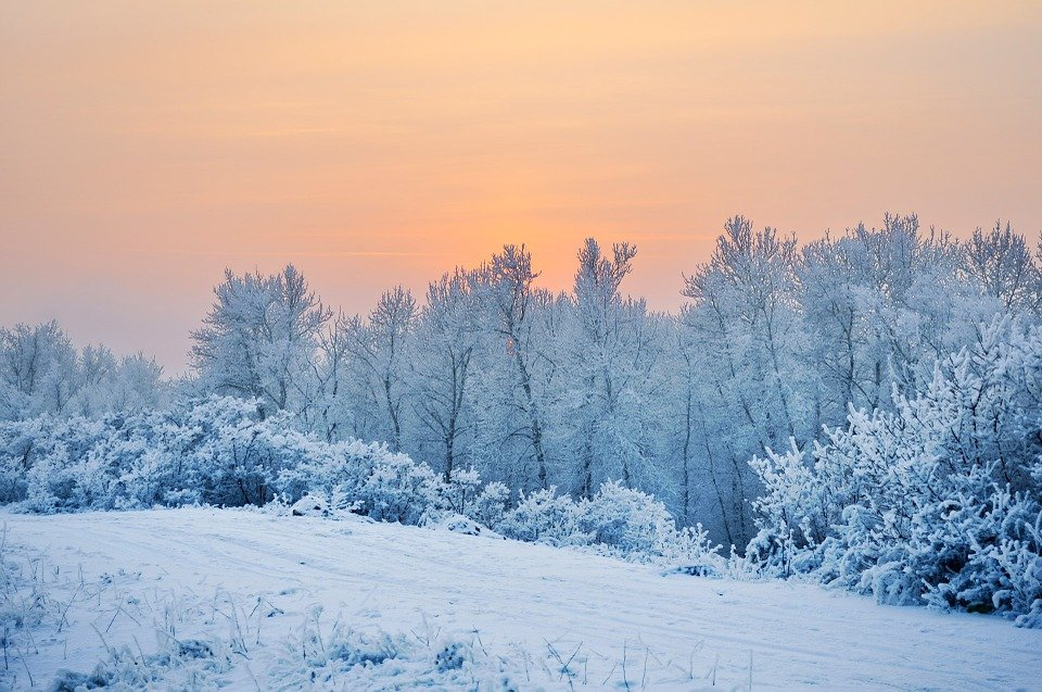 Зимний пейзаж, лес - Фото Pixabay