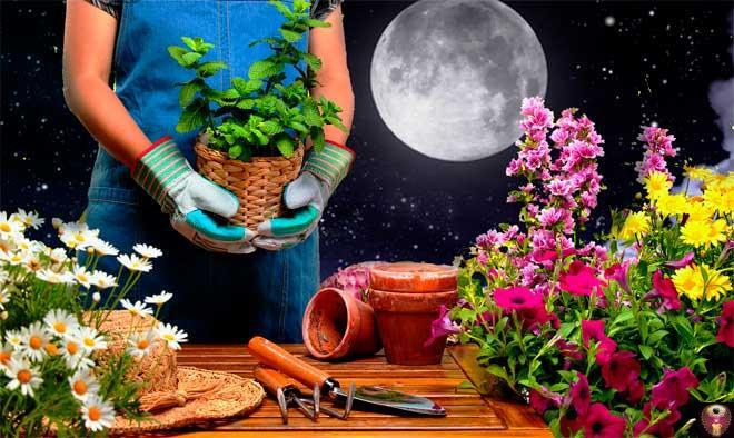 Когда лучше высаживать растения в Подмосковье – рекомендации лунного календаря на май 2020 года помогут получить хороший урожай в саду и огороде