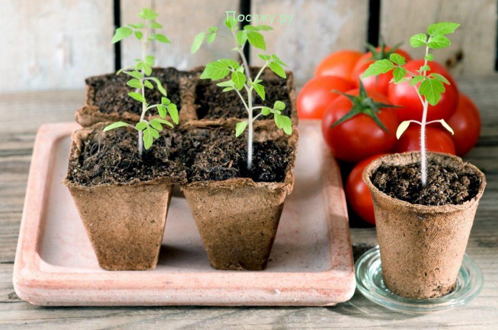 Самые благоприятные по лунному календарю дни пикирования рассады помидор в марте 2020 года для получения высокого урожая