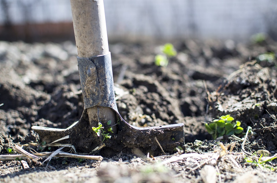 Высаживание капусты в открытый грунт весной 2020 года: благоприятные дни по лунному календарю, удобрения и подкормки