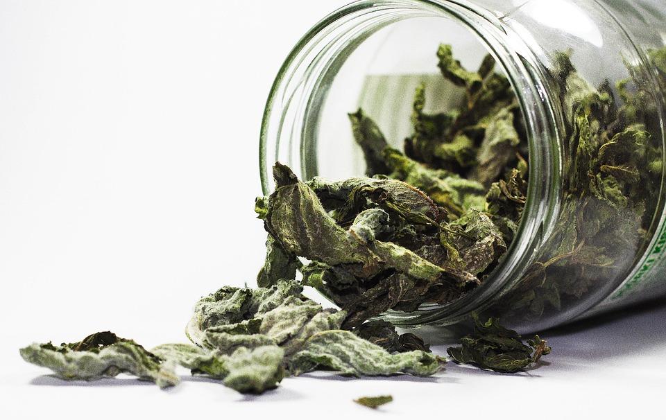 зеленый чай - польза для здоровья и вред
