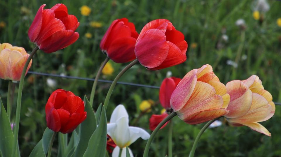 Карантин продлят на майские и далее: россиян не собираются отпускать из самоизоляции