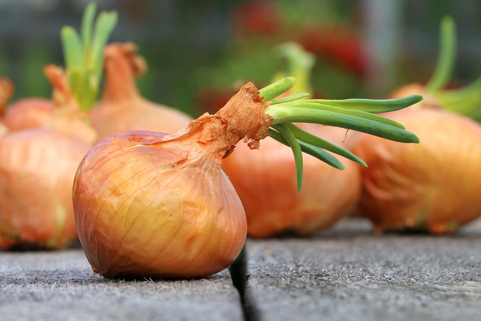 Огород на подоконнике: как получить урожай зелени в домашних условиях, популярные виды зелени и особенности выращивания