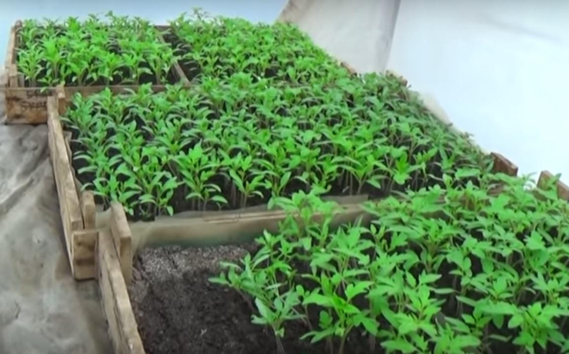 Благоприятные дни для посева овощей в апреле 2020 года по лунному календарю, секреты выращивания рассады
