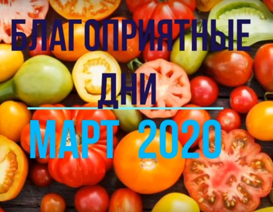 Самые благоприятные дни марта 2020 года для высаживания помидор по лунному календарю