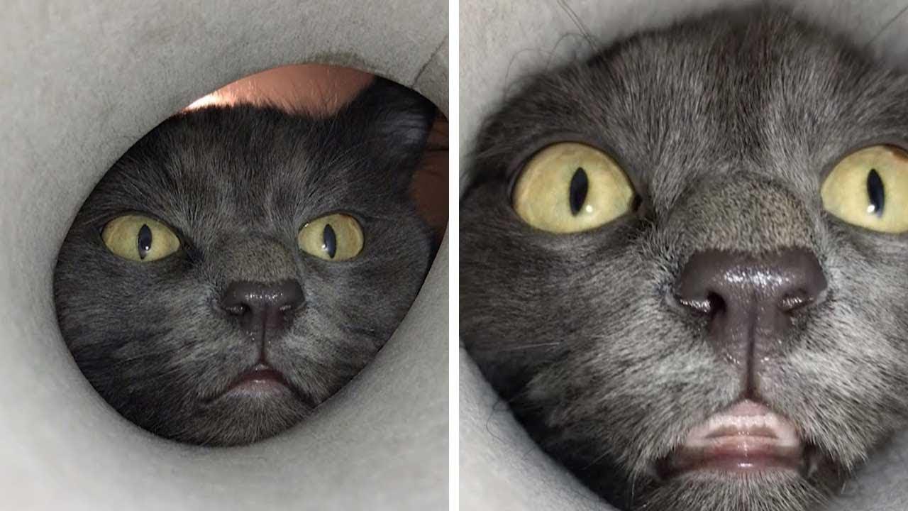 Любопытный кот из Сибири достал любимое лакомство и стал звездой Сети
