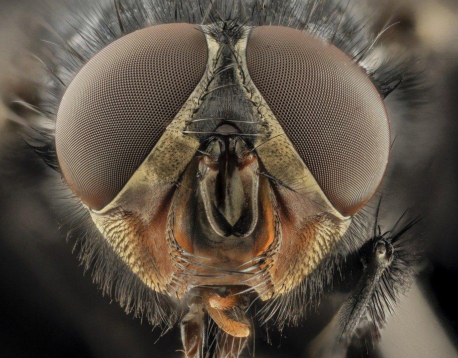 Объяснено катастрофическое исчезновение насекомых